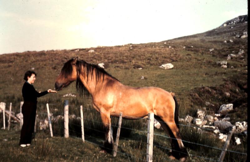 1959-9-3 (34a) Feeding highland pony.JPG