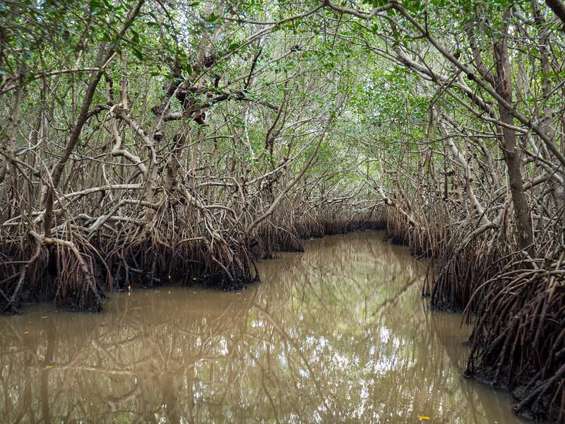 Everglades-69.jpg