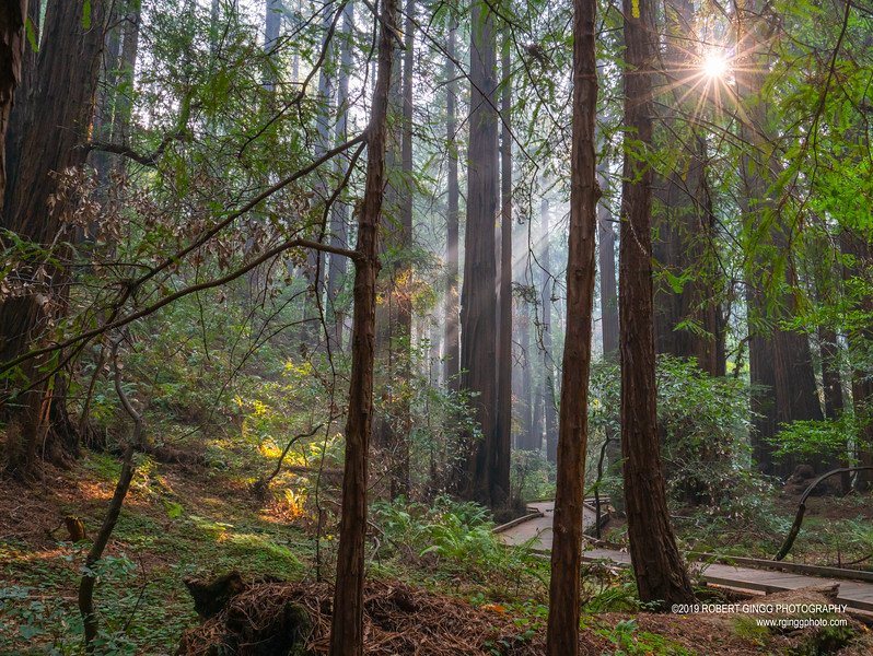 Muir Woods-7130.jpg