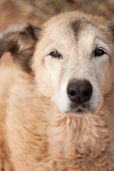 Lichen is one of the sweetest old dogs in the world.