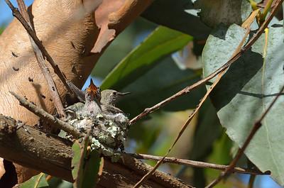 Parking Lot Hummingbirds