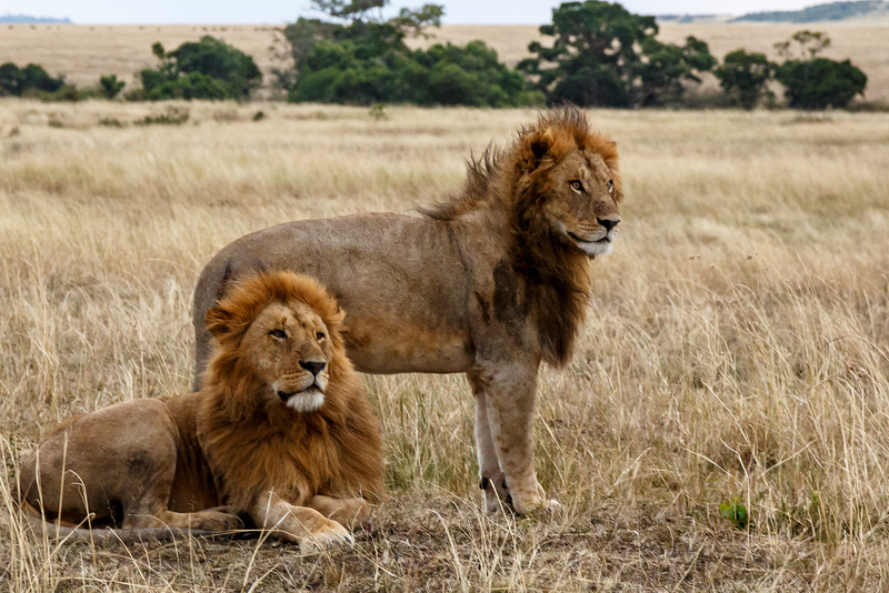 Kenya 2015-04908.jpg