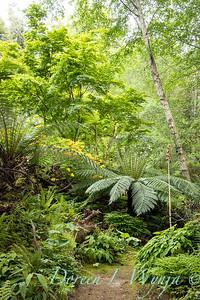 Stumpery - Pat & Walt Riehl - Vashon Island