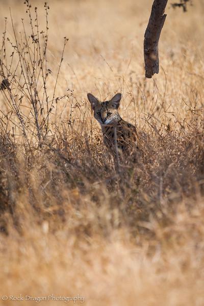 South_Serengeti-23.jpg
