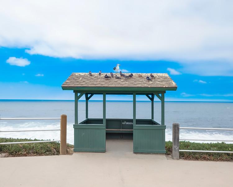 Seagull on Beach Hut.jpg
