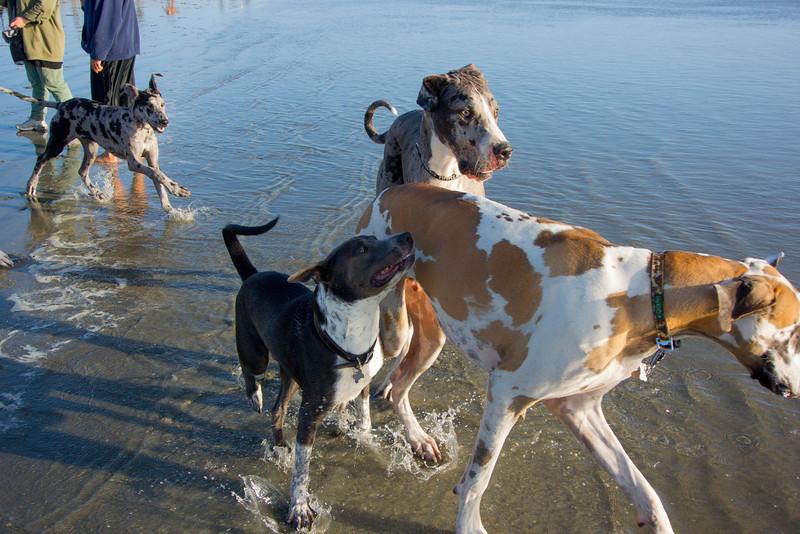 dogs_beach-23.jpg