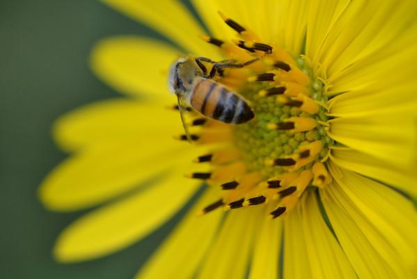 Butterflies, Bees & Such