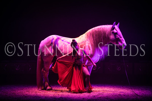 Boulonnais  Stallion and Alexa Rae