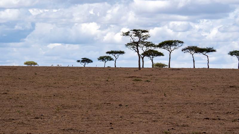 Tanzania-Serengeti-National-Park-Safari-07.jpg