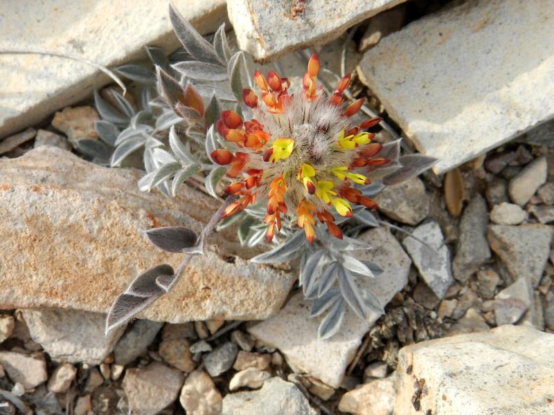 Flower tiny.jpg