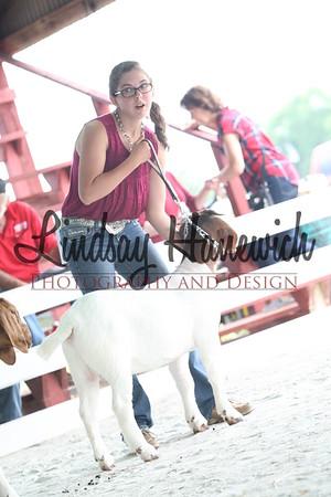 Ringshots - Boer/Meat Goat Does