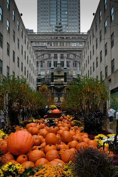 Pumpkins at Rocketfeller Center
