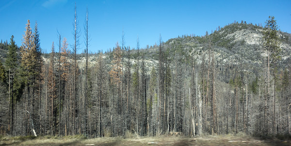 2016-12-26 Trip To Yosemite