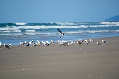 FAVORITES Oregon Coast - Cape Meares - 2014