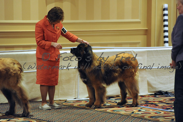 2014 Leonberger National Speciality