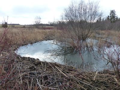 20121209 Beaver Dam