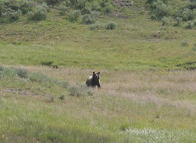 Zack's Yellowstone