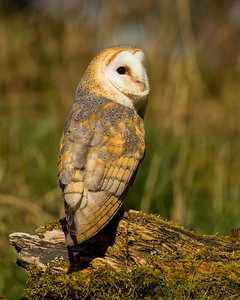 Winter Owl Special 1-2-1  save £50