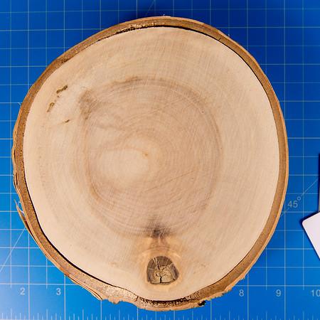 Encaustic Birch