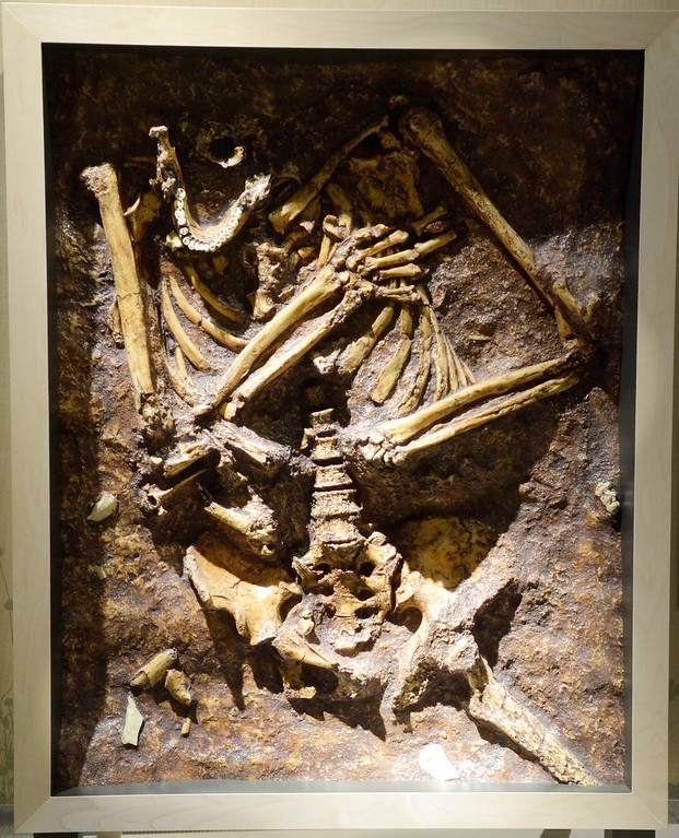 . Jeff Forman/JForman@News-Herald.com A casting of a presumed Neandertal burial site from Israel. approximately 60,000 years old, is featured in the Human Origins Gallery