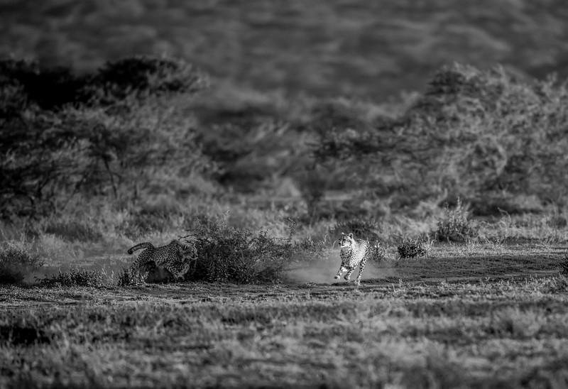 Tanzania_Feb_2018-131.jpg