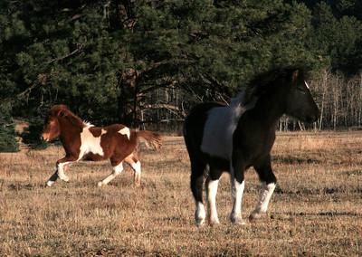Foals October 2007