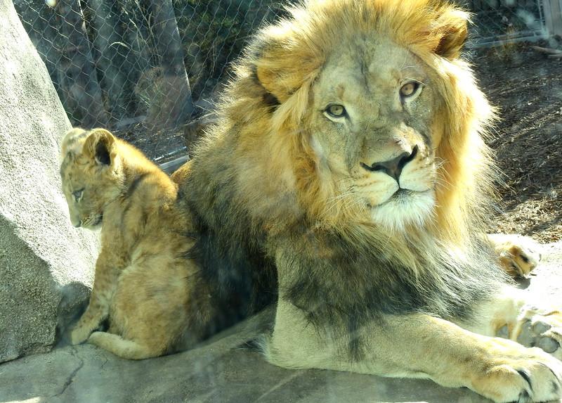 Denver Zoo 2019 (1346).JPG