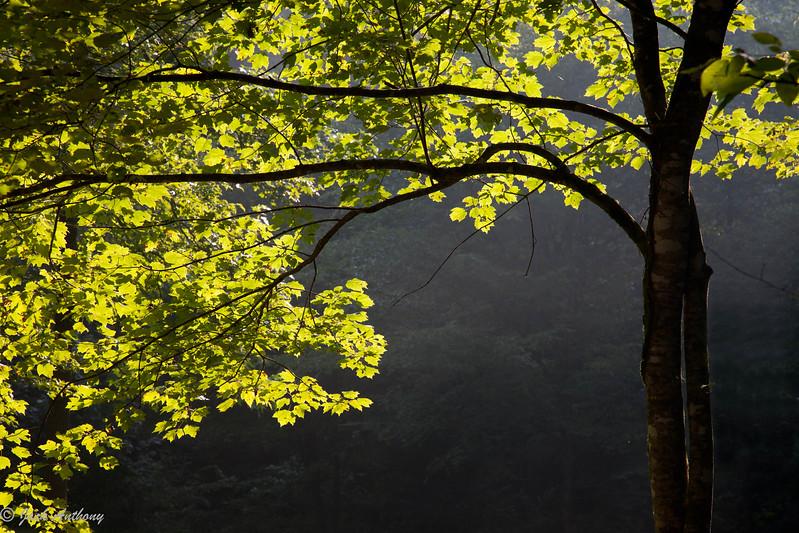 20100708-sun lit tree-4500.jpg