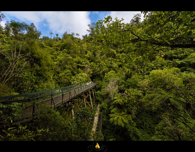 Waitakere_ranges_bridge.jpg