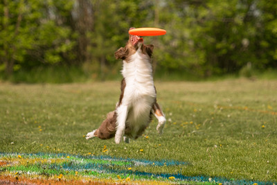 Disc Dog Events