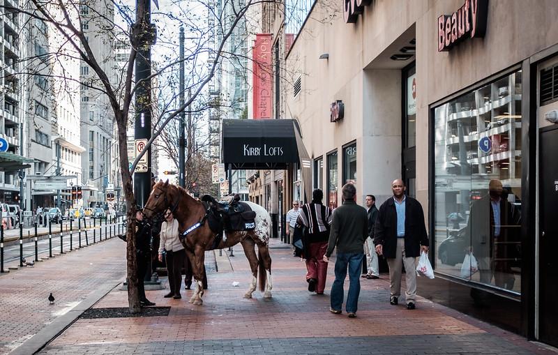 Horse DSCF0286-02861.jpg