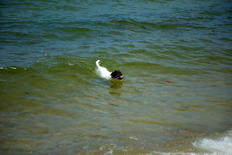 Cape Cod 2011 68.jpg
