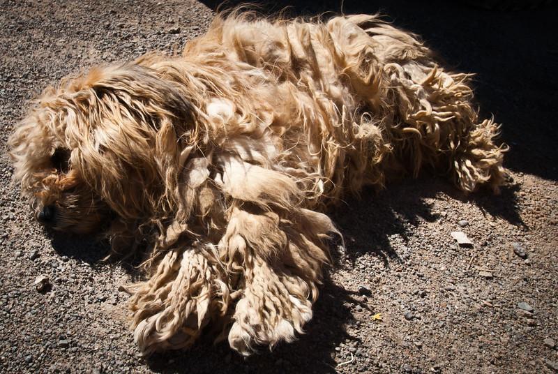 Tupiza to Uyuni 20120531 (116).jpg