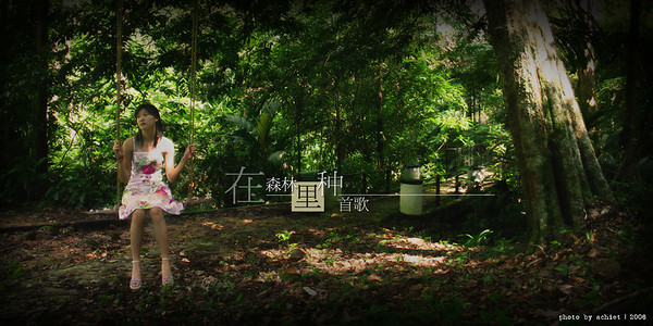 在森林里种首歌
