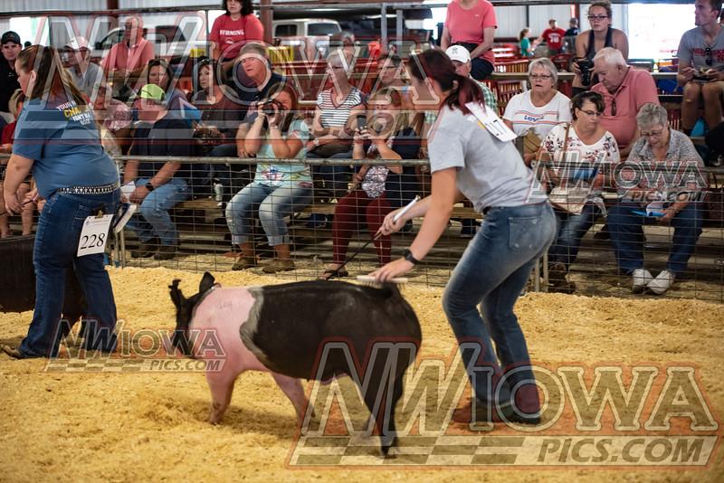 FFA Swine Show