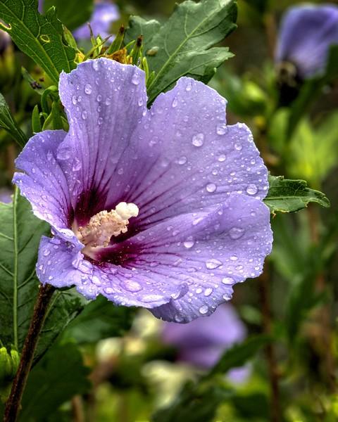Garden 1, 059.jpg