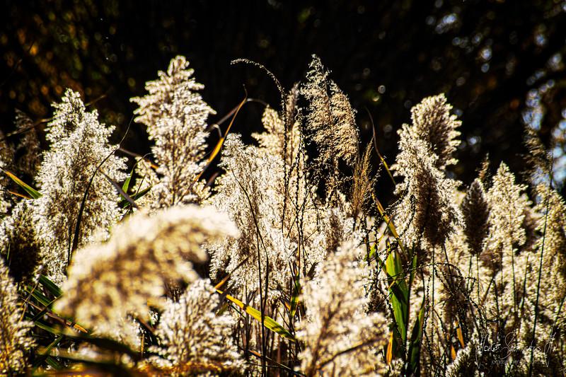 zig-zal-nature-photography-new-york-new-jersey-jorge-sarmiento-jr-IMG_7237.jpg