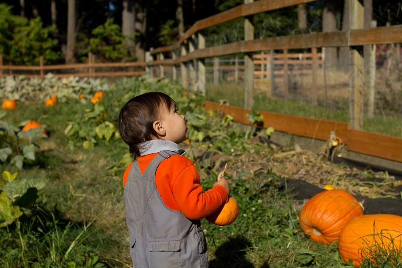 PumpkinPatch2012-219.jpg