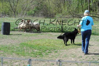 Tuesday Morning Herding Instinct Test