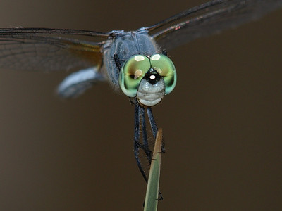Dragonflys and Other Insects