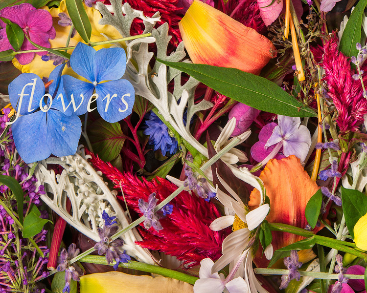 """2. f 05 12 -3 FLOWER MELANGE REF R F1 as of 05 04 1710 30 16-1   34"""" x 78"""" FILLED AND RETOUCHED LLHC.jpg"""