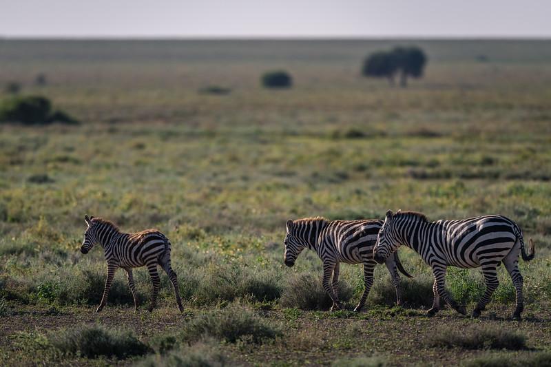 Tanzania_Feb_2018-431.jpg