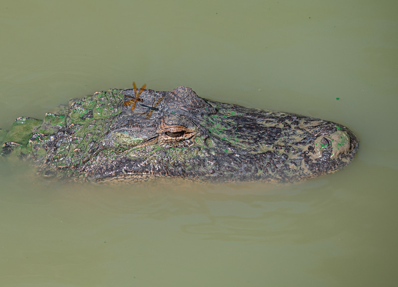 Gator-Country-8431.jpg