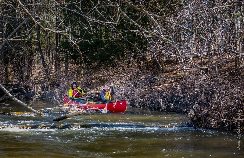 Nine Miles of Brush on the Nine Mile River