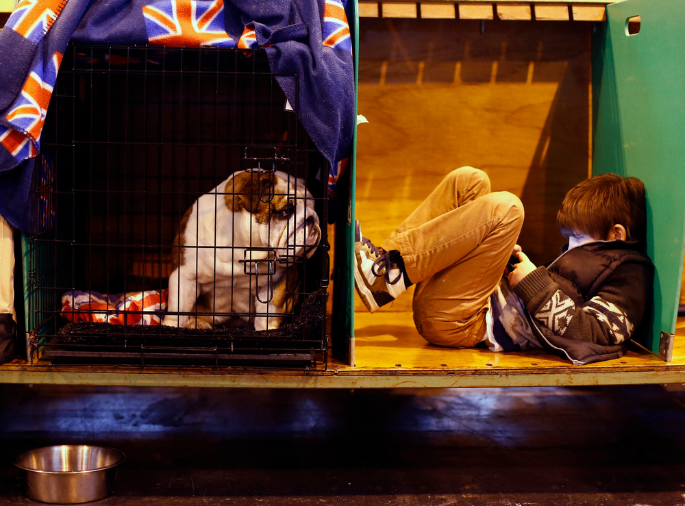 Description of . A boy rests with a Bulldog during the second day of the Crufts Dog Show in Birmingham, central England March 8, 2013.  REUTERS/Darren Staples