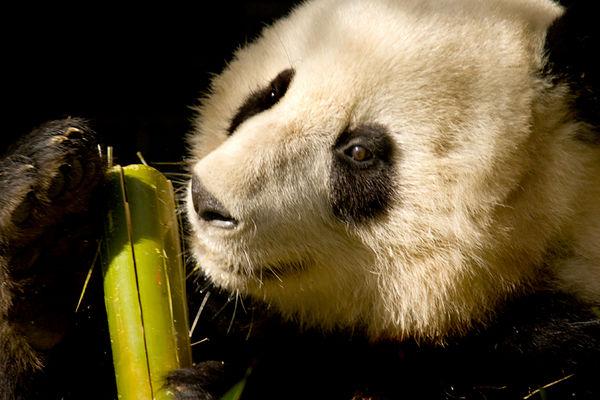 San Diego Zoo24