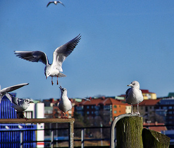 Gulls and other birds