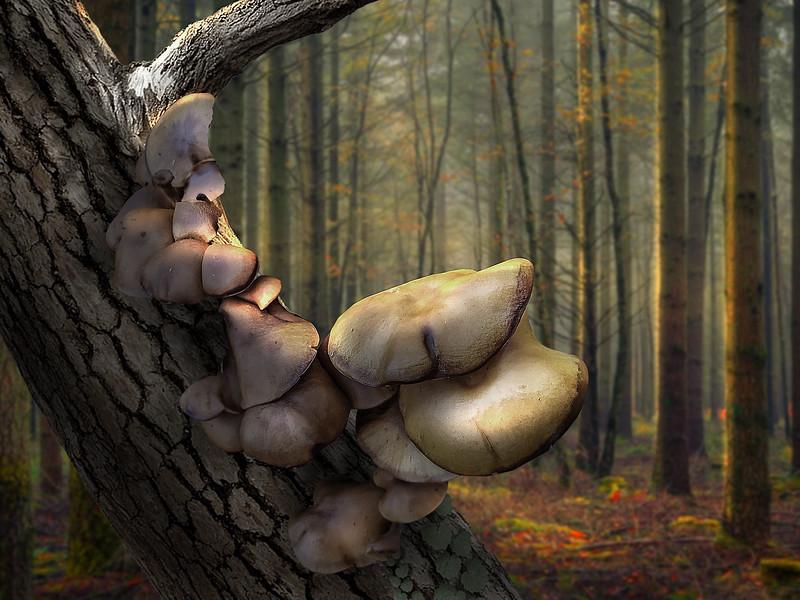 mushroom 1lr.jpg