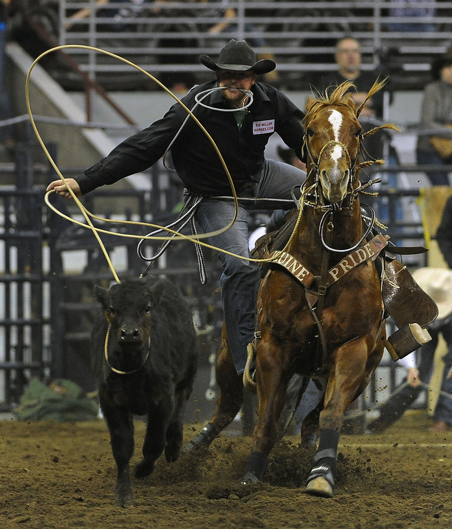 . DENVER, CO- JANUARY 27:   Jeremiah Peek of Pueblo, Colorado ropes a calf during the tie down roping event in the rodeo.  The final day of the 2013 National Western Stock show was Sunday, January 27th.  One of the big events for the day was the PRCA Pro Rodeo finals in the Coliseum.  The event featured bareback riding, steer wrestling, team roping, saddle bronc riding, tie down roping, barrel racing and bull riding.  (Photo By Helen H. Richardson/ The Denver Post)