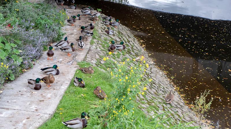 Ireland-Kilkenny-36.jpg